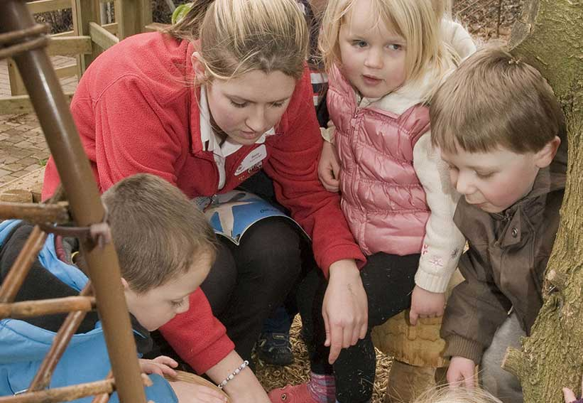 Outside Insects and Bugs - Playgarden