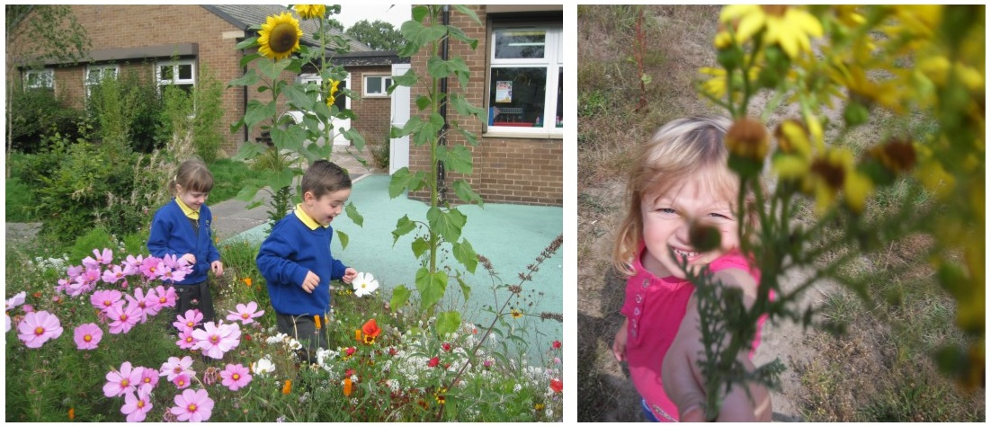 Planting in School Playgrounds